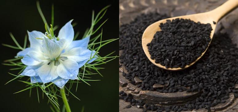 Масло черного тмина-исцеление от всех болезней