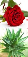 Toner Rose Hazel