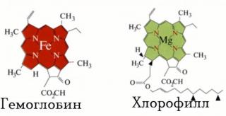 chlorohyll-hemoglobin