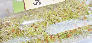 Now-Foods-Sprouting