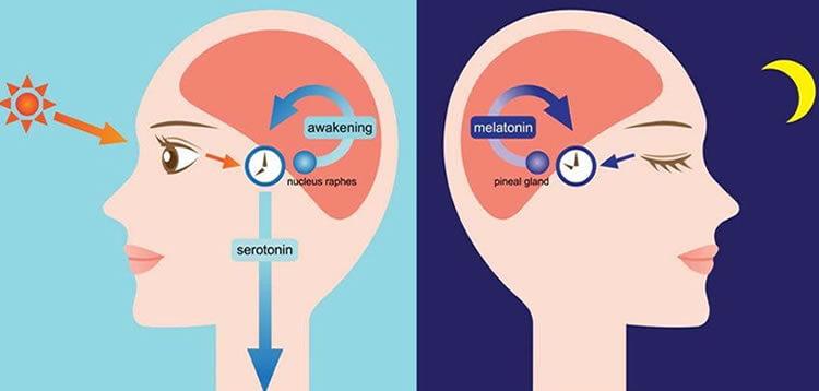 Melatonin-Serotonin