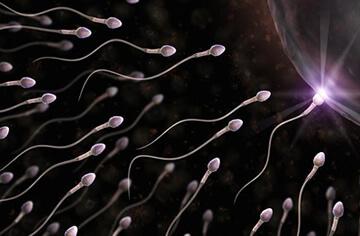 sperm-cells