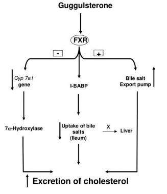 guggulsterone-and-cholesterol